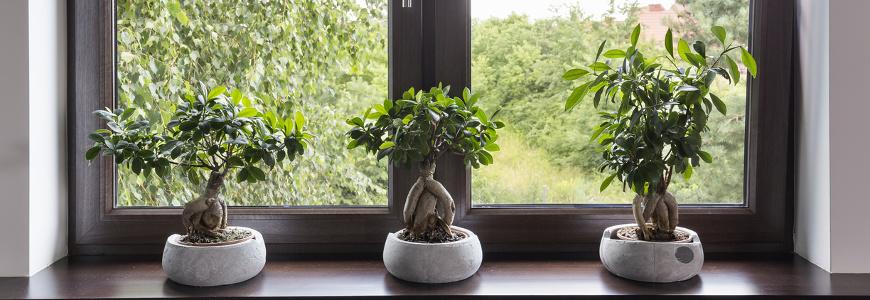 Jak udekorować okno? 5 pomysłów na ciekawą aranżację z wykorzystaniem rolet